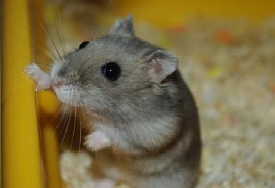 raton_ciego