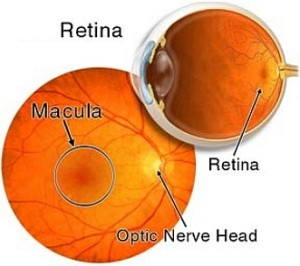 Científicos argentinos logran tejido reparador de retina a partir de grasa.