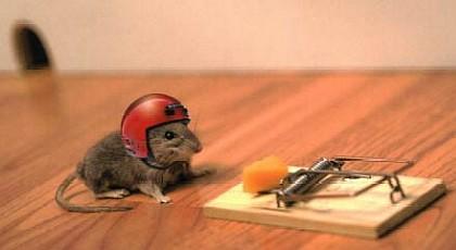ratones_memoria