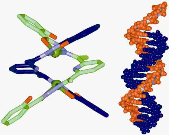 Comparación entre la estructura simétrica de un dihelicato de Ni(II) (izquierda) y los dos surcos en la doble hélice del ADN (derecha).