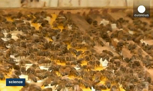 abejas_bacterias
