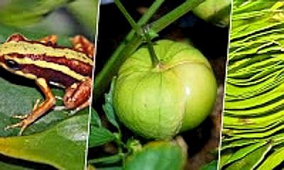 Biodiversidad-Patentes