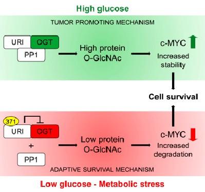 metabolismo-glucosa-cancer