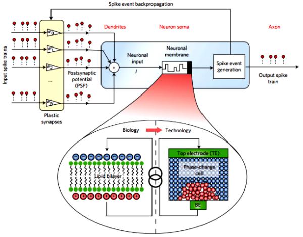 Esquema de las neuronas artificiales de cambio de fase. Foto: IBM