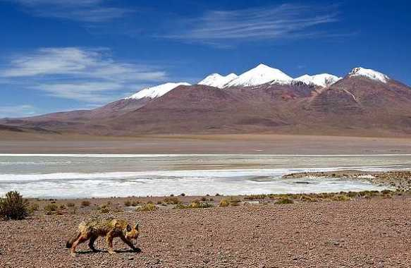 altiplano2