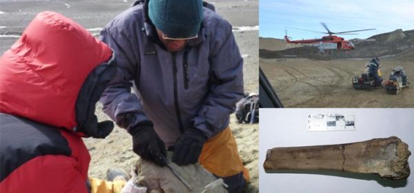 Investigadores argentinos rescatan fósiles todos los años durante las campañas antárticas