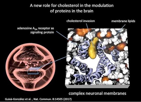 colesterol-proteina-adenosina